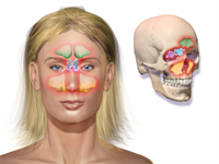 Odontogenic Sinusitis - An Introduction