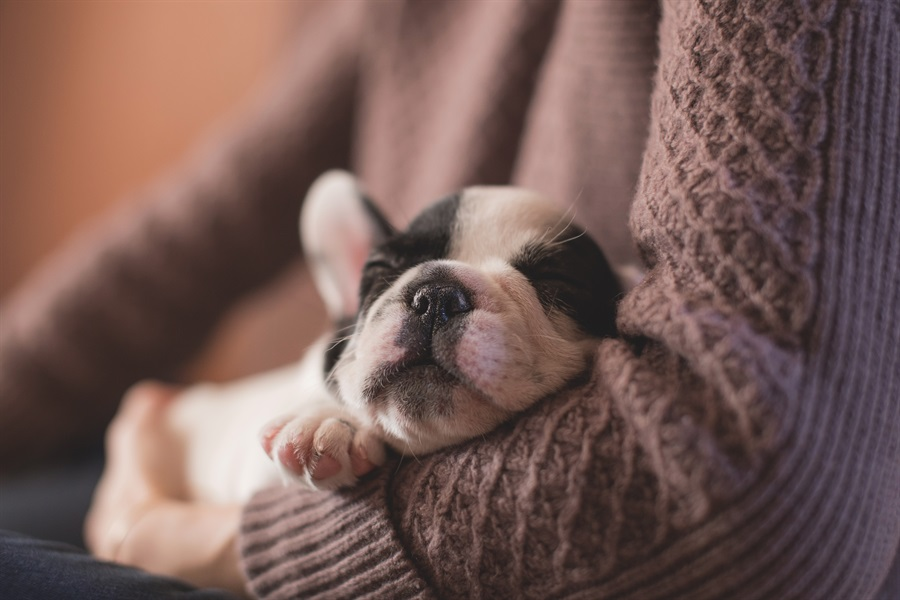 Estate Planning: Don't Forget Your Pet!