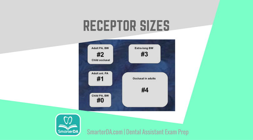 Q: The receptor size usually required for a full-mouth series on a six-year-old patient is: