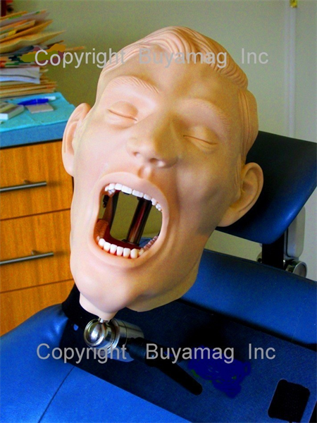 THE BEST DENTAL TEACHING RESOURCE ARE DENTAL MODELS FOR HANDS - ON EXPERIENCE AND PRACTICING DENTISTRY TECHNIQUES