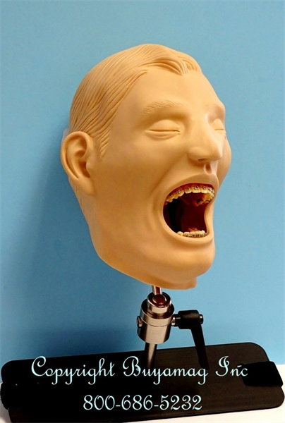 www. Buyamag.com Offer Orthodontic Models Manikin Simulation For Dental Schools Education, Training, Teacing And Practicing