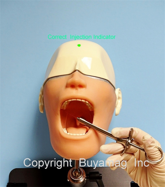 At Buyamag Inc we design Dental Models Manikins Simulator Phantoms for dental schools, teaching educating and training students dentistry techniques, teeth anatomy, oral hygiene and disease.