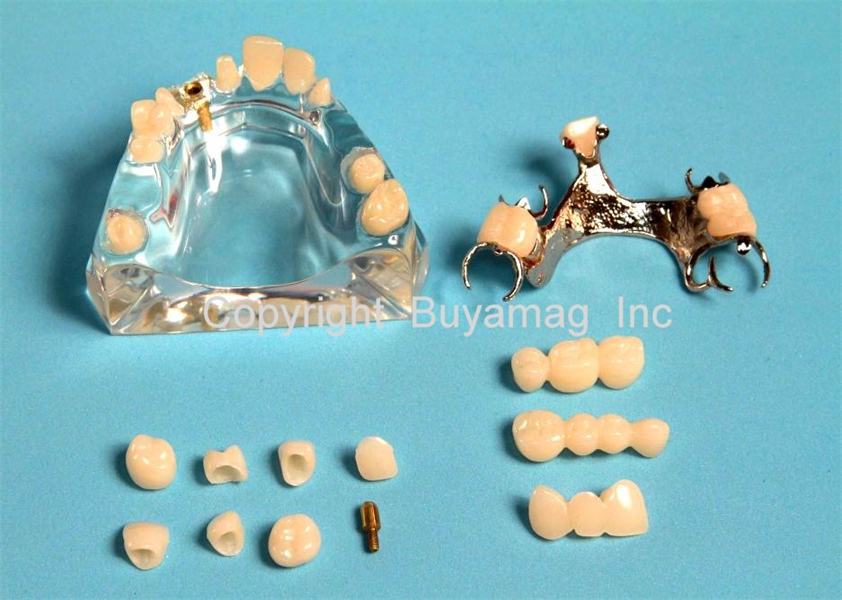 Buyamag.com Design Dental Models Manikins Simulators Phantom for Education Teaching Students Orthodontic Periodontal Hygiene Dental Techniques In Dental Schools