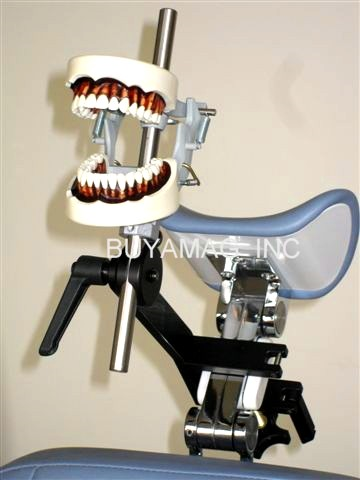 Buyamag.com offer dental students a portable dental models manikin simulation with universal dental chair headrest or on bench mount.