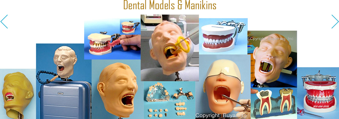 BUYAMAG INC SUPPLY DENTAL MODELS PRACTICE MANIKIN, TRAINING SIMULATORS PHANTOM HEAD ORTHODONTIC PERIODONTAL IMPLANT MODEL