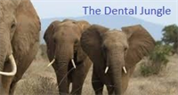 The Dental Jungle - The New Patient